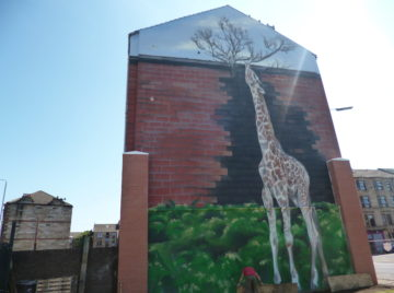 image of the ailsa giraffe